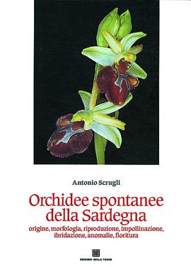 Orchidee spontanee della Sardegna