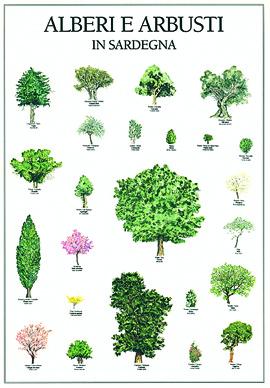 Alberi e arbusti in Sardegna